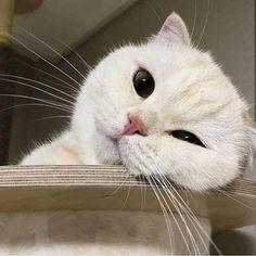 Your eyeballs pets cute - # eyeballs pets - Katzen - Animals Cute Baby Cats, Cute Kittens, Cute Baby Animals, Animals And Pets, Cats And Kittens, Pretty Cats, Beautiful Cats, I Love Cats, Crazy Cats