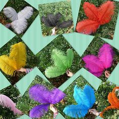 Wholesale 10/50pcs High Quality Natural OSTRICH FEATHERS 15-55cm/6-22
