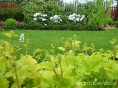 Anulajda w raju - strona 76 - Forum ogrodnicze - Ogrodowisko