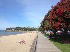 Mission Bay, Auckland, NZ #rtw #newzealand