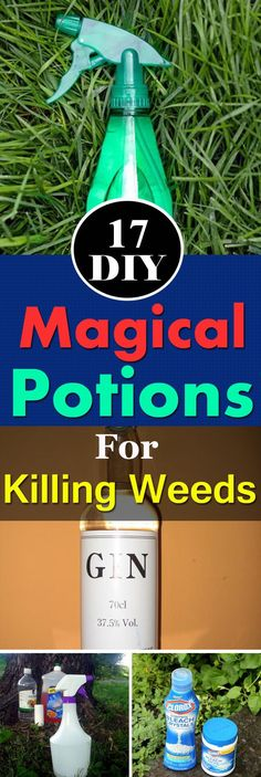 After reading this post, killing weeds will become a cinch for you, and you'll stop buying herbicides.