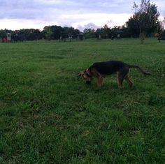 Found something! - Kitun Dog Park - St. Louis, MO - Angus Off-Leash #dogs #puppies #cutedogs #dogparks #stlouis #missouri #angusoffleash