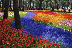 Parque Hitachi Seaside en Ibaraki, Japón.