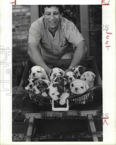 1986 Press Photo Harry Halliburton with family English Bulldogs - Pinned by Judi Crowe.