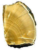 Cat's Eye Ulexite :: Popular stone - jewels, gemstones, semi-precious & original stones :: Magic stone and minerals of the world earth :: Sale of the stone, wares of a stone, beads, pendant, setback, candlestick, stone ball, miniature, semiprecious stone, Kharkov, Ukraine, CIS, call phones +38 050-1357929, +38 063-4877833, Anton A. Kaftanov