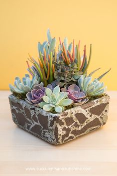 I love the variety of plants in this arrangement by Mimi of I Dream of Succulents in cement stone planter