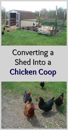 Step by step guide on how to convert a basic shed into a functional chicken coop!