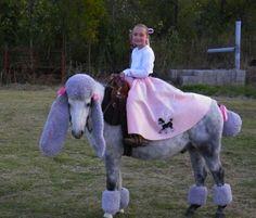 HorsePoodle