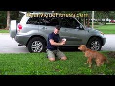 Killer 1 min Hover Workout Challenge!