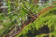 wald°sinnen: Schul°Wald Nature, Agriculture, Woodland Forest, School, Naturaleza, Natural, Scenery