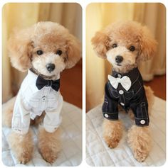 How to Make Toy Poodle Clothes