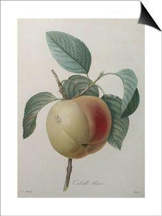 Pierre-Joseph Redouté, Canvas Art and Posters at Art.com