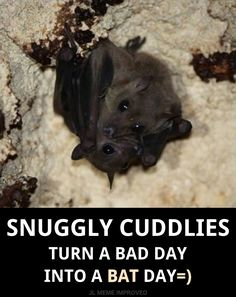 Snuggly Cuddlies ~ Turn A Bad Day Into A Bat Day=)