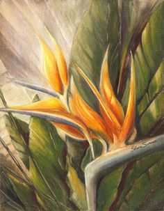 """""""Bird of Paradise"""" - oil pastel on canvas board by Shera Summer © 2011"""