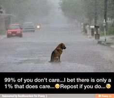 Omg. This is so sad!!! I'm literally almost crying! That poor, poor, dog! Why?!?! SOMEONE HELP HIM! HE HAS NO WHERE TO GO!