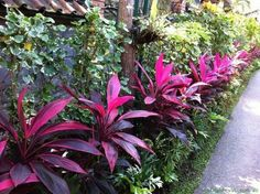 tropical garden Tropical Plantation Ideas You Can Try In Your - Metarnews Sites Florida Landscaping, Tropical Landscaping, Landscaping Plants, Front Yard Landscaping, Landscaping Ideas, Tropical Garden Design, Tropical Backyard, Tropical Plants, Tropical Gardens