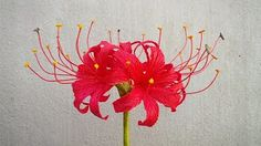 abc tv flower making - YouTube
