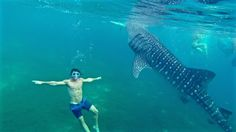 Swimming with Oslob whale sharks Philippines 6 pack body aroundtheworldwithjustin.com
