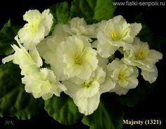 Majesty (Bransit).  Полумахровые крупные бахромчатые бело-желтые цветы. Светло-зеленые волнистые листья. (Чужое фото)