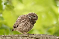 Lil' Owl, Big World by Roeselien Raimond on 500px