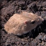 Free short films to teach evolution and ready-to-use classroom supplements to support the short films! A new example to teach natural selection with the cute pocket mouse.