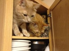 Q: How many cats can fit into a kitchen cabinet?  A: Four.  via @BkSmrtLib