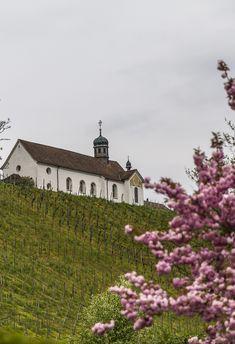 Kartause-Ittingen-Kirche Kirchen, Mansions, House Styles, Rainy Weather, Wine, Manor Houses, Villas, Mansion, Palaces