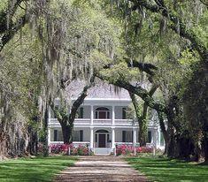 southern plantations - Bing Images