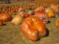 10 Tips for Exploring Pumpkin Patches With Kids