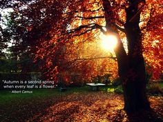Autumn is the second Spring, where every leaf is a flower .