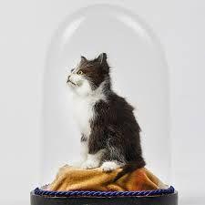 taxidermy kitten - Google Search