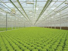 Hydroponic Gardening Hydroponics Give Growers Control Hydroponic Farming, Hydroponic Growing, Aquaponics Fish, Hydroponics System, Hydroponic Gardening, Homemade Hydroponics, Permaculture Farming, Agriculture Farming, Small Garden Layout