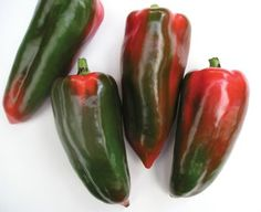NGB Year of the Sweet Pepper:  Martha-R F1 is an attractive disease resistant Lamuyo pepper bred by Sakata Vegetables