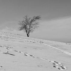 #blackandwhitephoto #blackandwhite #bw #winter #snow
