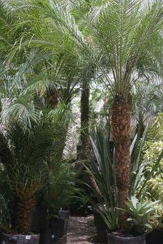 Praticidade: Plantas fáceis de cuidar garantem verde sem dar trabalho - Casa e Decoração - UOL Mulher