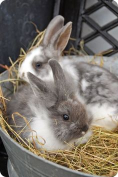 bunny love...