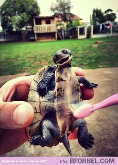 Turtle Tickle with a toothbrush.  Thank you for the Pin @Lauren Davison Davison Davison Holloway  - All Grins 4 Kids - pediatric dentist in Shilioh, IL @ www.allgrins4kids.com