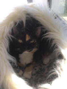 Ellie Cat | Pawshake