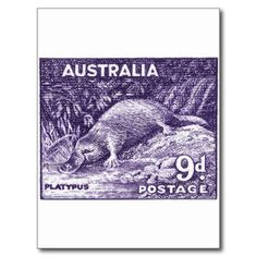 =>Sale on          1956 Australia Platypus Stamp Postcard           1956 Australia Platypus Stamp Postcard in each seller & make purchase online for cheap. Choose the best price and best promotion as you thing Secure Checkout you can trust Buy bestDeals          1956 Australia Platypus Stam...Cleck Hot Deals >>> http://www.zazzle.com/1956_australia_platypus_stamp_postcard-239216329110584566?rf=238627982471231924&zbar=1&tc=terrest