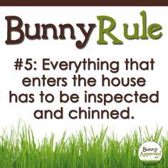 Bunny Rule #5