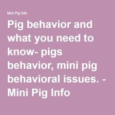 Pig behavior and what you need to know- pigs behavior, mini pig behavioral issues. - Mini Pig Info