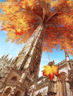 Cathedral Tree; I love, love Autumn it's my favorite season, and I am Roman Catholic. Perfect!