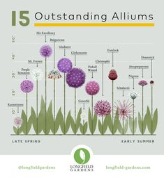 Our newly expanded Planning Guide for Alliums makes it easy to visualize how these plants will look in your perennial gardens and other landscaped areas.