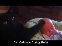 Cat Calms Crying Baby to Sleep