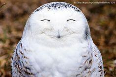 Des photos d'animaux agréablement drôles (Comedy Wildlife Photography Awards)