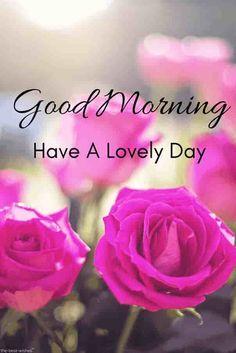 Looking for best Good Morning Wishes and Images with Rose? Check out our collection of beautiful HD Images, Pictures and Pics to send to your loved ones and spread a smile on their faces. Happy Good Morning Images, Good Morning Nature, Good Morning Roses, Good Morning Messages, Good Morning Good Night, Morning Pictures, Morning Quotes, Funny Morning, Morning Pics