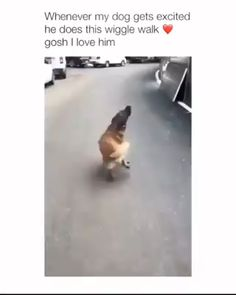 This is hilarious! 😂 Source by dog dog memes dog videos videos wallpaper dog memes dog quotes dogs dogs pictures dogs videos puppies puppy video Funny Animal Jokes, Funny Dog Memes, Funny Dog Videos, Funny Animal Pictures, Cat And Dog Memes, Pet Memes, Funny Facts, Dog Pictures, Pet Humor