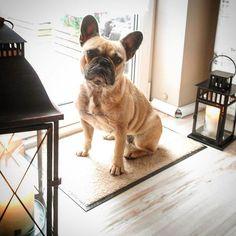 """wash+dry Floor Fashion auf Instagram: """"Schönen Mittwoch Euch allen! ❤️💙 Kaja steht die neue wash+dry Monocolour in der Farbe sahara ausgezeichnet! @dreierlei_glueck…"""" Kaja, Wash N Dry, French Bulldog, Friends, Dogs, Animals, Instagram, Color, Amigos"""