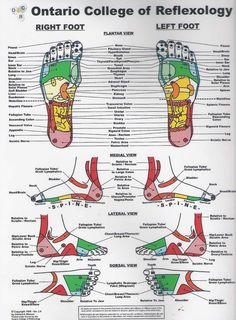 reflexology | Reflexology charts can come in all shapes and sizes from a small book ...