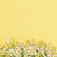 Sending you all a little flower power ️️ … World Wallpaper, Laptop Wallpaper, Aesthetic Iphone Wallpaper, Screen Wallpaper, Aesthetic Wallpapers, Flower Backgrounds, Photo Backgrounds, Wallpaper Backgrounds, Happy Sunday Friends